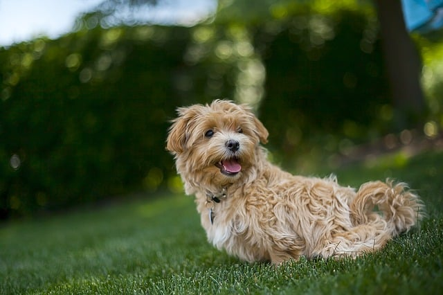 Don't Miss Bark in the Park at Hoopes Park in West Chester
