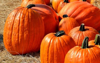 Get in the Autumn Spirit at the Wasson Market Fall Fest