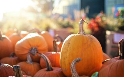 Expect Seasonal Agritainment at Froehlich Farm's Fall Festival