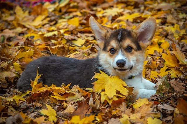 Bring Your Pup to Providence Animal Center's Bark in the Park & Fall Festival
