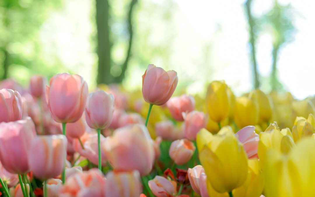 Don't Miss Spring Blooms at Longwood Gardens