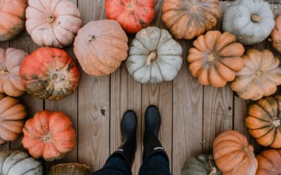 Find Fall Decor and More at Rockberry Farms in Wellsboro