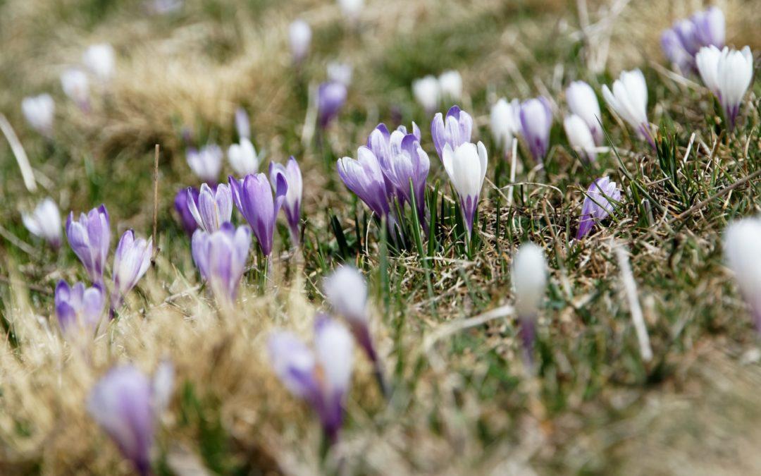 Unpack a Spring Picnic at Norristown Farm Park Near Norris Hills Apartments