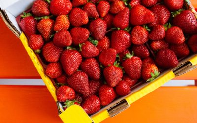 Phoenixville Farmers Market: Shop Spring Produce and More Near Stone Gate Woods