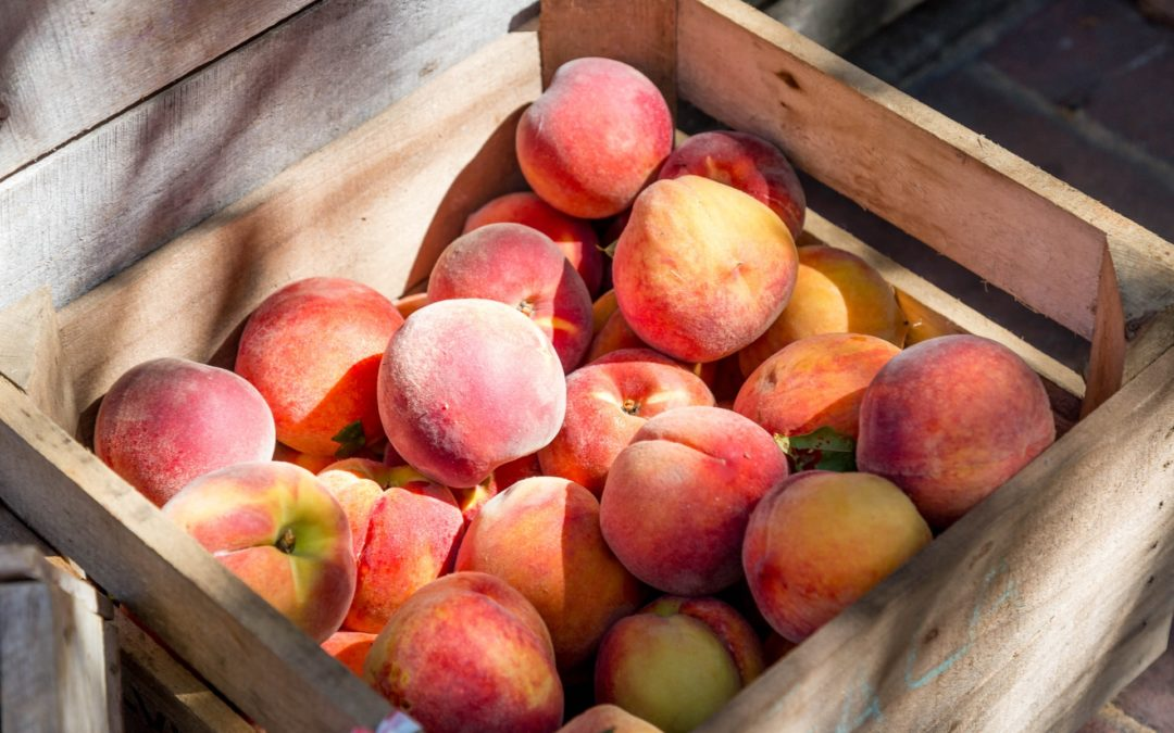 Enjoy Summer Agritainment at Linvilla Orchards, Just Moments From Aston Glen