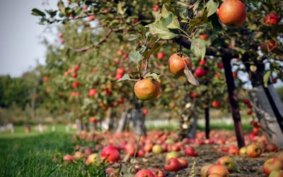 Spend a Sunny Fall Day Near The Dorchester at Styer Orchard
