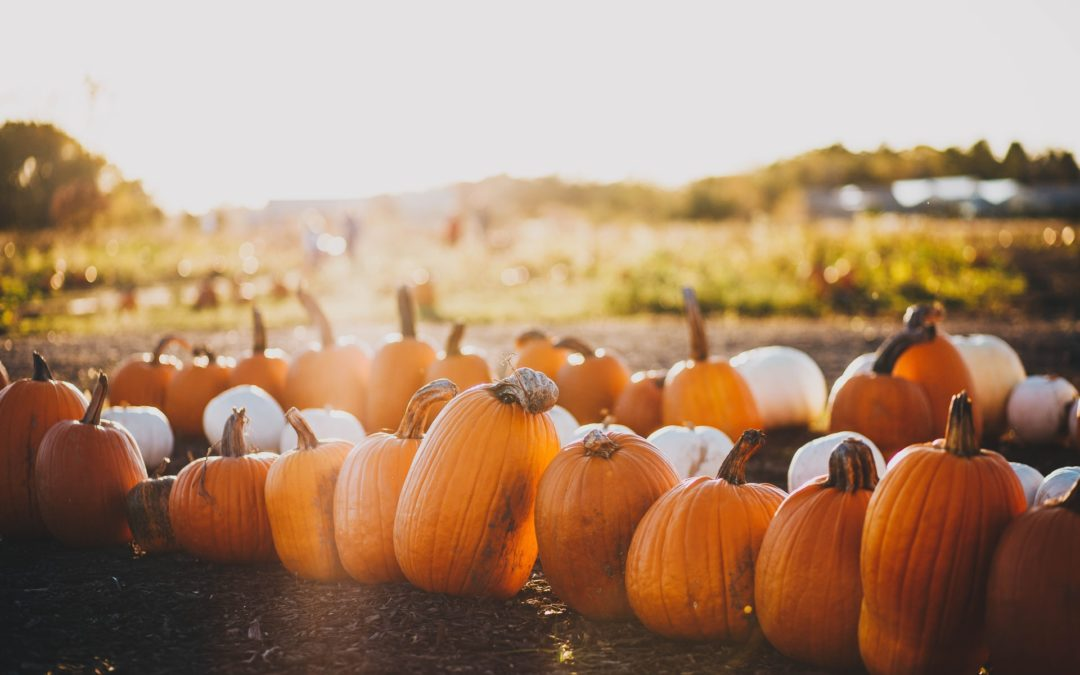 Spend a Sunny Fall Day at Hellerick's Family Farm in Doylestown